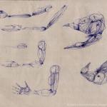 K023-Arme-Anatomie-973-M
